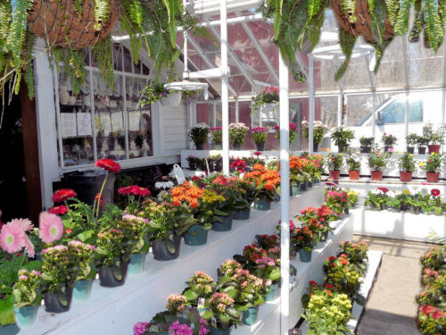 Grays Flower Shop Fourth Generation Of Family Service